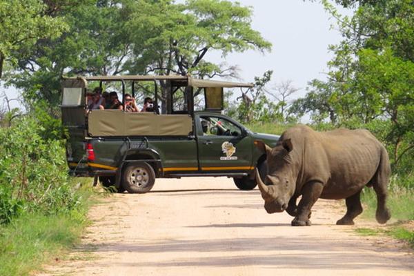 Open Vehicle Safari